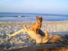 Ostsee - Piratennest Darss - Wassergrundstück mit Hund, Angeln in Born