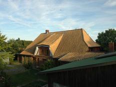 Unterm Ginko in Steinberg