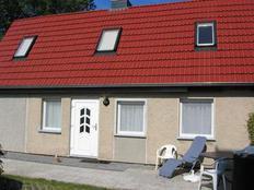 Haus-Sonnenblume in Bodstedt